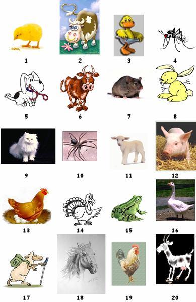 Super LES ANIMAUX (1)Auteur: Mireille SPALACCI KH69